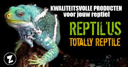 Branding REPTILUS