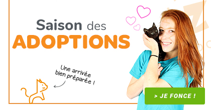 Saison adoption