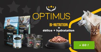 Branding OPTIMUS