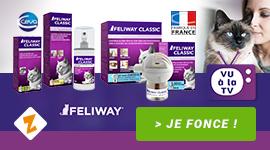 Feliway : pour un chat + Zen !