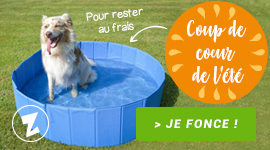 Piscine pour chiens à petits prix