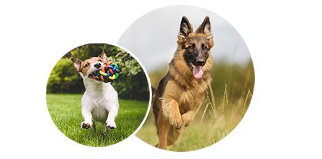 croquettes chien croquettes pour chiens pas cher pro plan. Black Bedroom Furniture Sets. Home Design Ideas