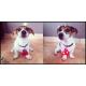 Flasher-pour-chiens_de_Gwendoline_154350444451e84165af2487.63549667