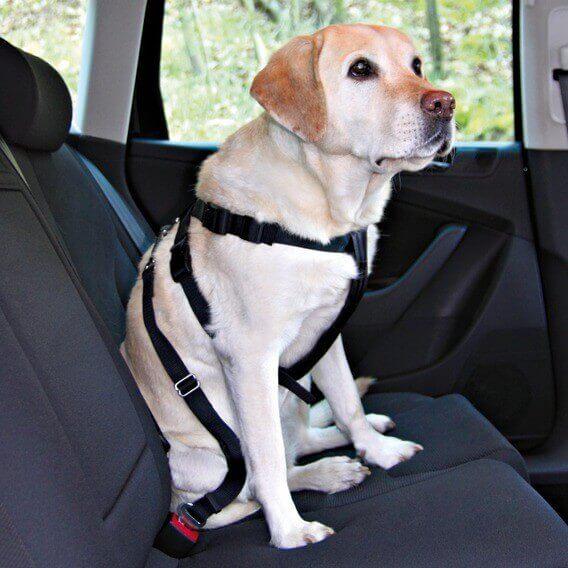 Harnais pour voiture sécurisé_0