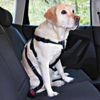 Arnés de seguridad para coche (todos los tamaños)