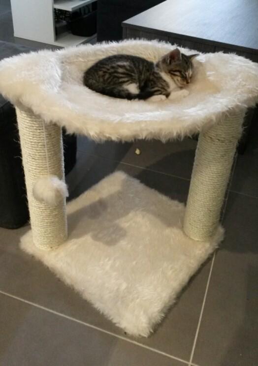 avis sur arbre chat baza 50cm. Black Bedroom Furniture Sets. Home Design Ideas
