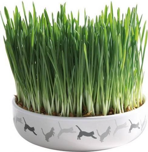 herbe chat avec une cuelle en c ramique herbe chat. Black Bedroom Furniture Sets. Home Design Ideas