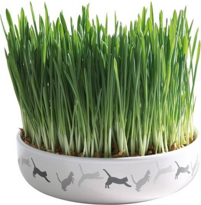 Ceramic Bowl with Cat Grass