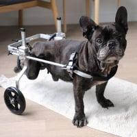 Rollstuhl & Buggy