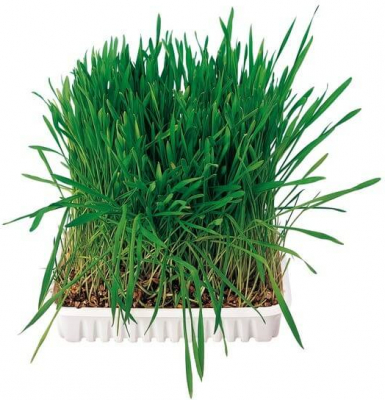 Herbe pour petits animaux