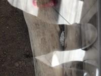 Calcium-pour-reptiles-micro-fin_de_Yohann_4518932655c56e01b05d733.67833216