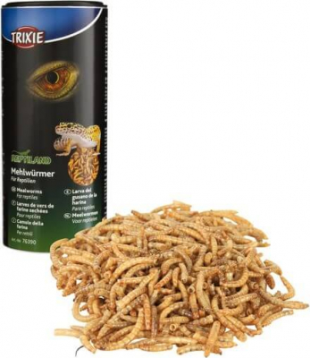 Mealworms for Reptiles