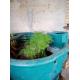103057_Terreau-de-Bassin-Velda-Plant-Soil_de_PATRICE_503151749612e2269992e12.21199815