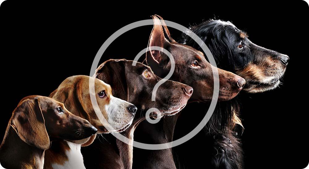 Tout type de chiens