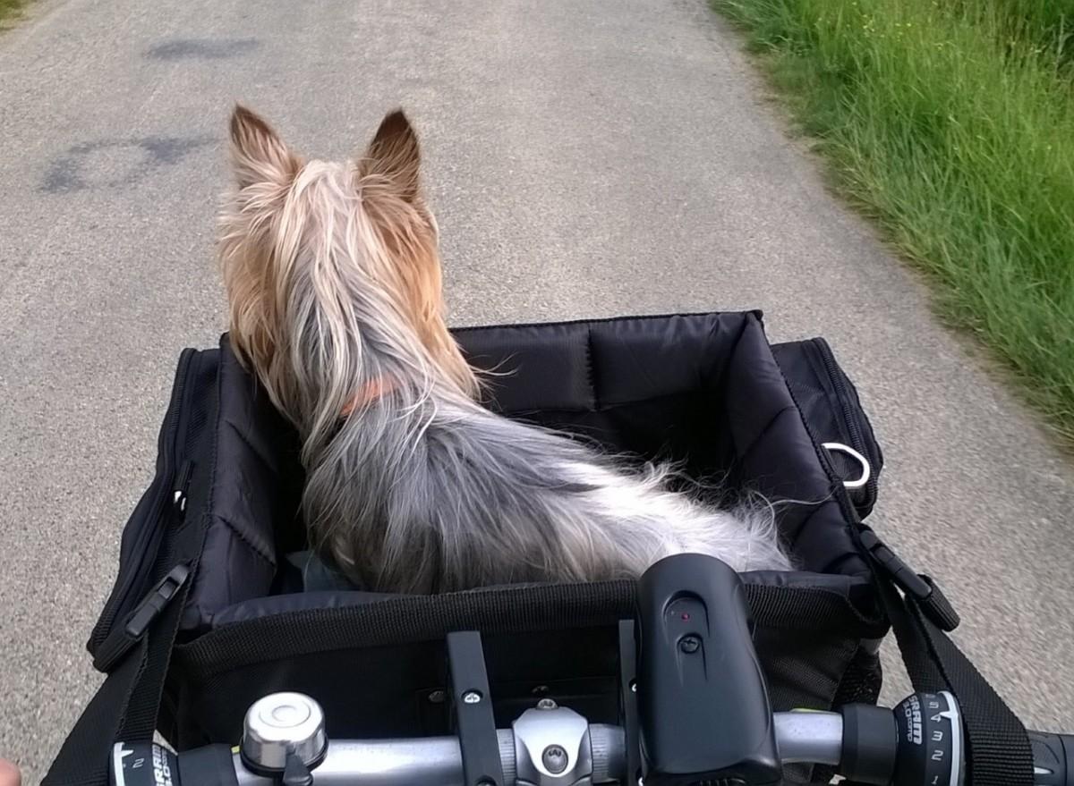 Avis Sur Panier Avant à Vélo Pour Chien Front Box De Luxe