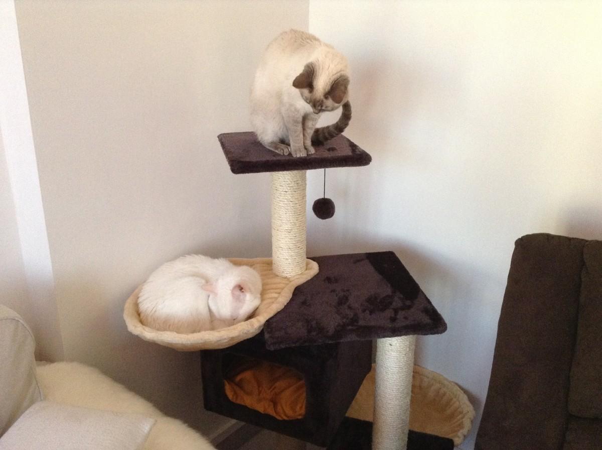 arbre chat palamos arbre chat. Black Bedroom Furniture Sets. Home Design Ideas