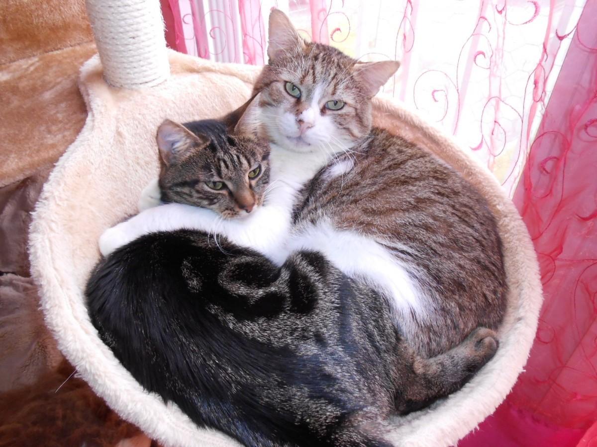 avis sur nid xl pour poteau arbre chat beige. Black Bedroom Furniture Sets. Home Design Ideas