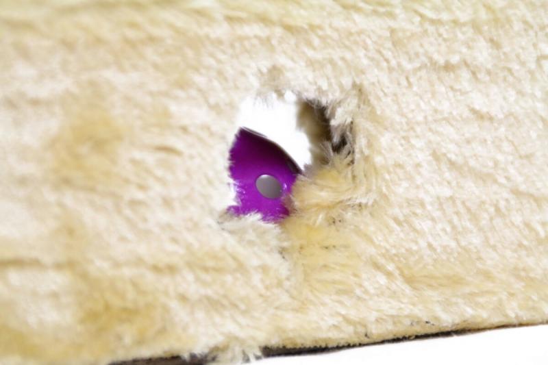 Cat's Cheese