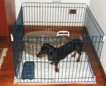 Parc pour animaux DOG TRAINING