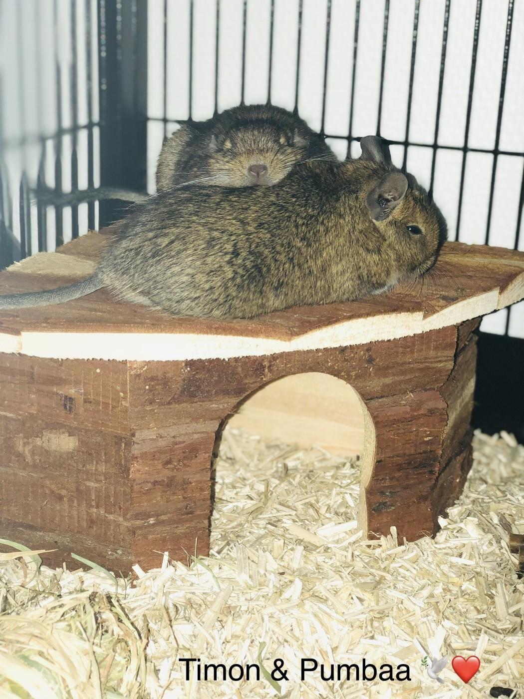avis sur maison d 39 angle pour hamster cochon d 39 inde lapin. Black Bedroom Furniture Sets. Home Design Ideas