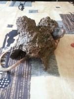 Grotte-souche-d'arbre_de_Nicolas_134735316155e1e768891853.57504038