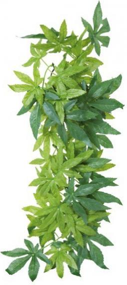 Plante tissu à suspendre, Abutilon