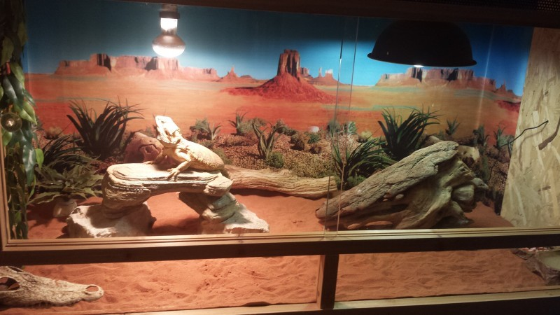 decors terrarium desertique