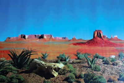 Fond décor de terrarium motif désert