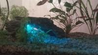 11234_Décors-pour-aquarium-rocher_de_Charlene_3890549575a734cef6c3cf7.37829420
