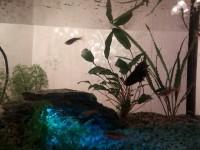 11234_Décors-pour-aquarium-rocher_de_Charlene_5196333575a734d0316d5d0.52913386