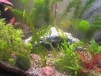11234_Décors-pour-aquarium-rocher_de_VERONIQUE_174478327756bcf49a8b7cd2.88569624