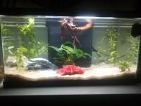 Decors-pour-aquarium-rocher_de_Amelie_9576771195d210a44d88603.58682703