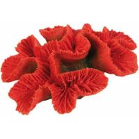 Bouton de corail MEDIUM