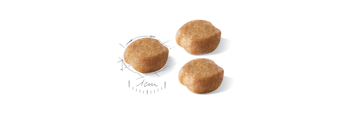 royal canin adult yorkshire croquettes
