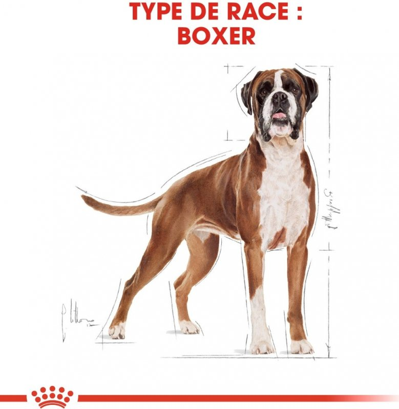 Royal Canin Breed Boxer 26 adult