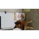 11473_Royal-Canin-Breed-German-Shepherd-Adult-pour-Berger-Allemand-_de__2185776475e9d9bb8d547d2.83762318