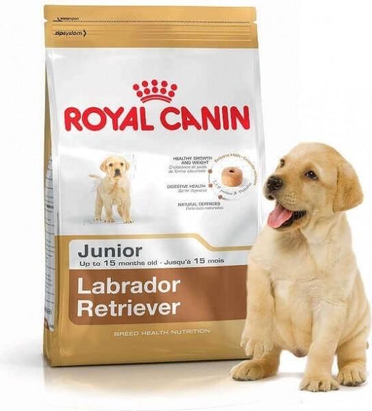 royal canin labrador retriever junior. Black Bedroom Furniture Sets. Home Design Ideas