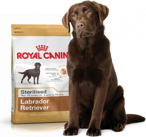 Royal Canin Breed Labrador Retriever 30 STERILISED adult