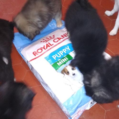 avis michèle royal canin puppy mini