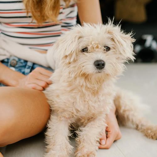 avis nadege royal canin puppy mini