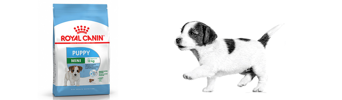 royal canin croquettes puppy mini