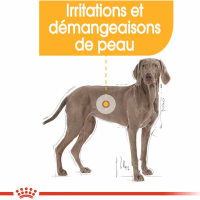 Royal Canin Maxi Adult Dermacomfort