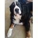 11564_Royal-Canin-Giant-Junior_de_Frederic_4054860856027c6e57ef1b8.75980109