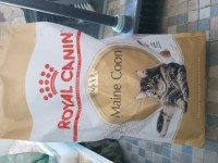11572_Royal-Canin-Breed-Maine-Coon-_de_Angelique_9622405005bfea5270aa013.27576511