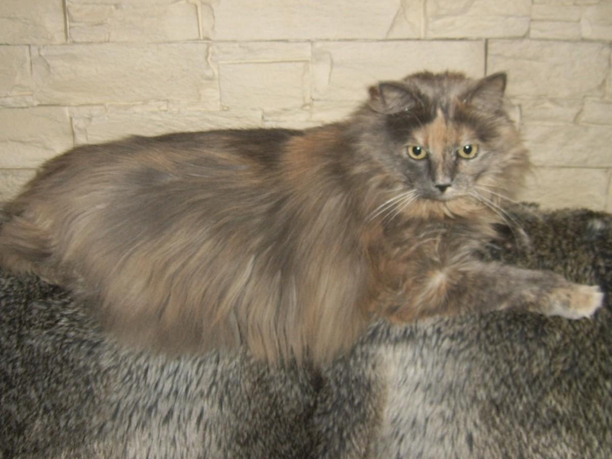 avis sur royal canin feline adult sterilised 37. Black Bedroom Furniture Sets. Home Design Ideas