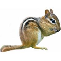 Repas complet OPTIMA écureuil