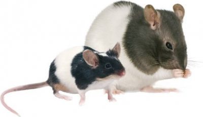 Hamiform Optima repas complet rat et souris