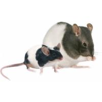 Granulés pour rats et souris repas complet OPTIMA