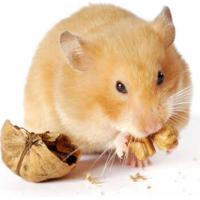 Repas complet OPTIMA hamster nain