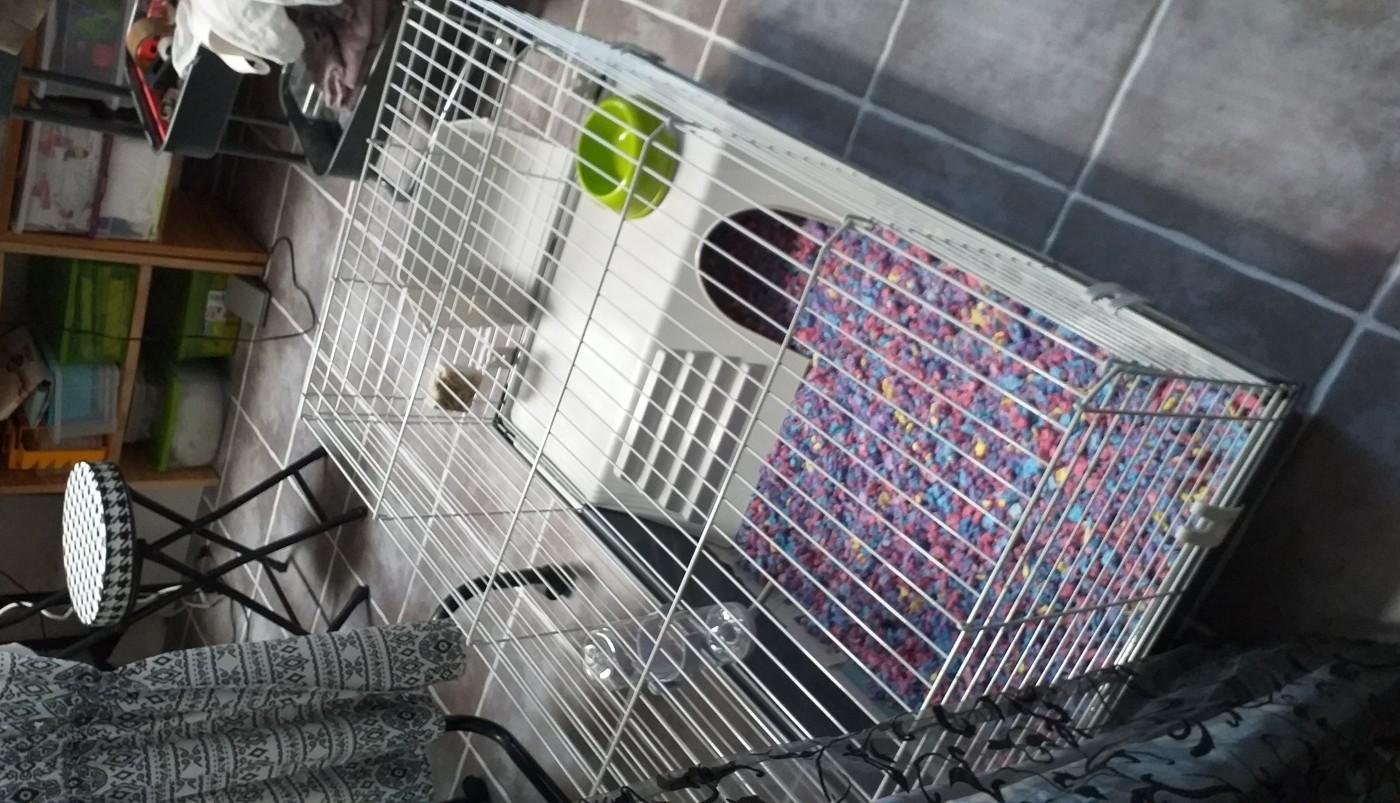 avis sur cage rabbit 100 pour lapin et cochon d 39 inde. Black Bedroom Furniture Sets. Home Design Ideas